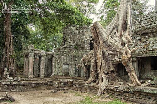 деревья побеждают камень, Ангкор
