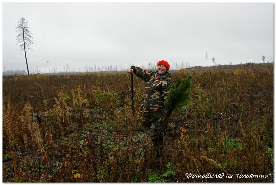 Посадка леса в дождь