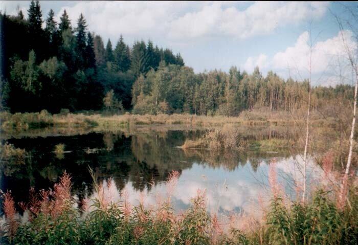 заводи на реке Молодне у шоссе Иглово - Андреевское
