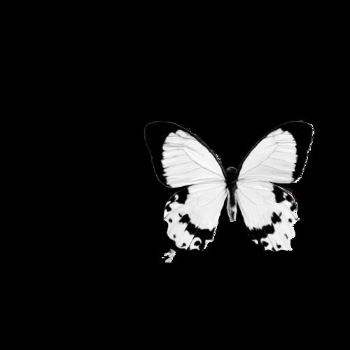 «In My Garden» 0_95c10_e7e7c92e_L