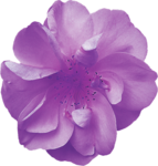 MyPassion_ViolettDesign_el (40).png