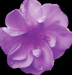 MyPassion_ViolettDesign_el (40).png