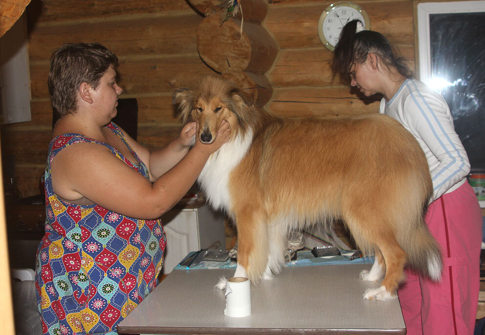 Недельные курсы повышения квалификации для собакообожак :-) Приглашаем всех!!! - Страница 2 0_7d760_6cbb55d0_XXL