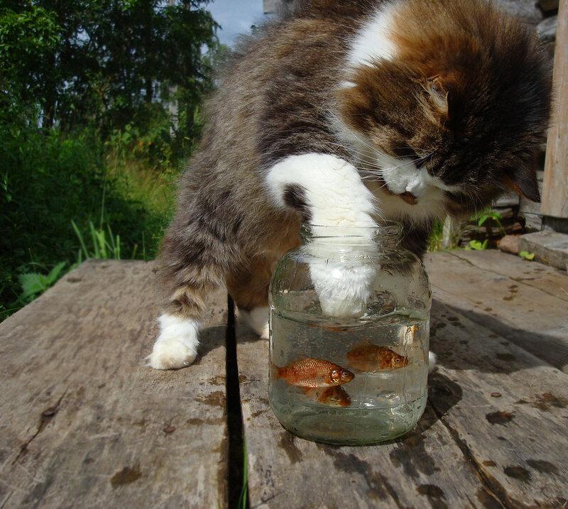 Отважный рыболов.