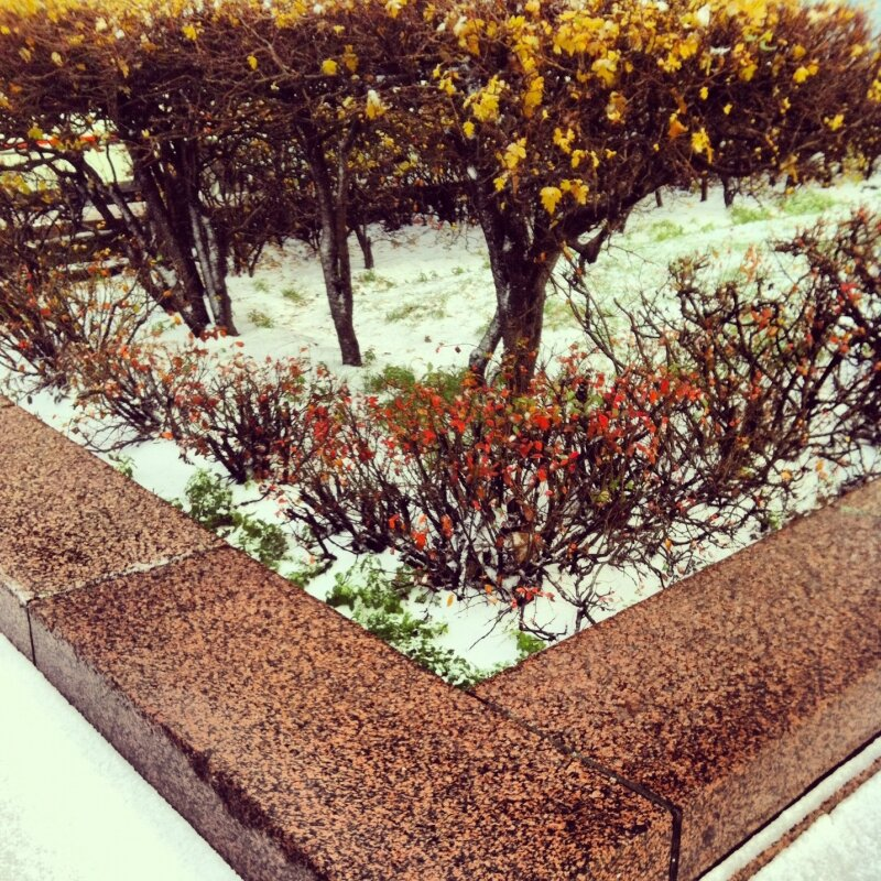 Снег и между