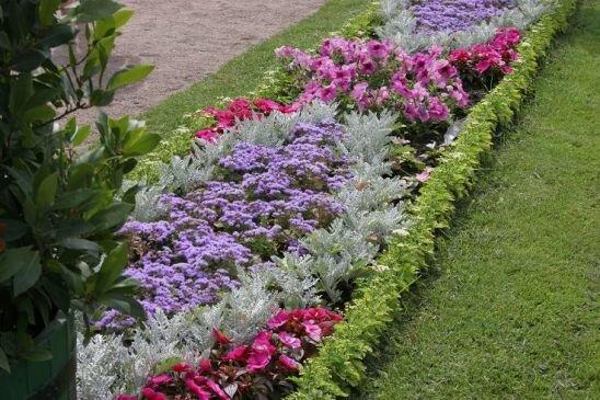 Цветовая гамма растений в клумбах может быть однотонной или многоцветной.  Зачастую основной сегмент насаждения...
