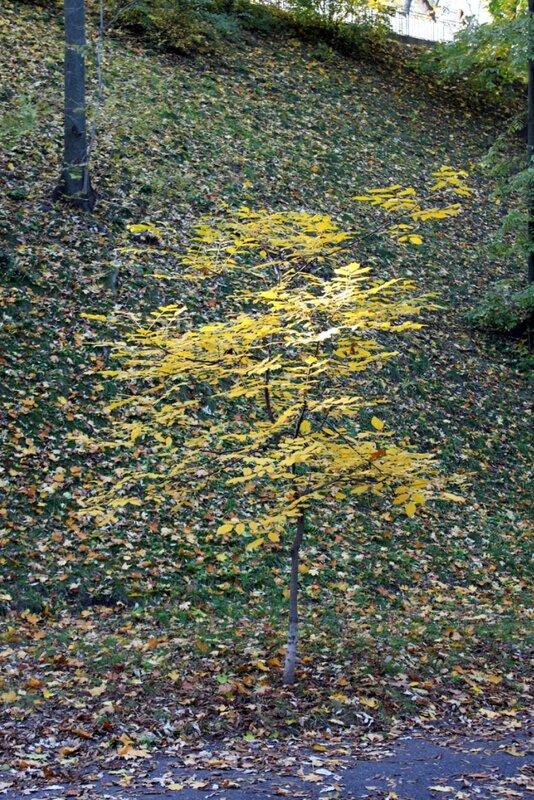 Молодое деревце на фоне склона