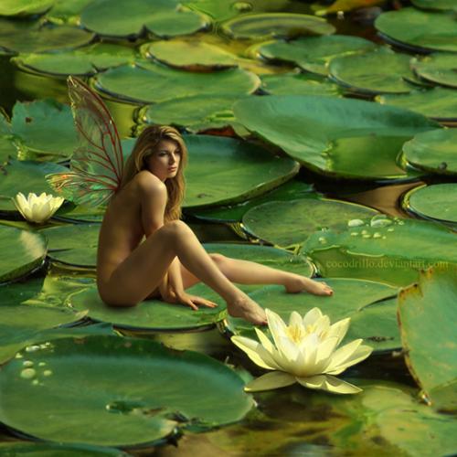 Видео и фото голых женщин бесплатно
