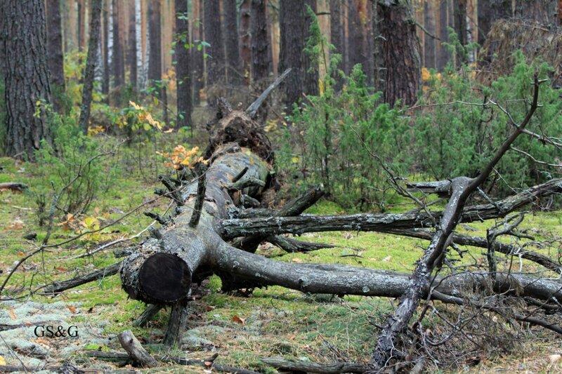 В выходные побродили по лесу, очень хочется поделиться с вами своими впечатлениями.  Царство грибов.