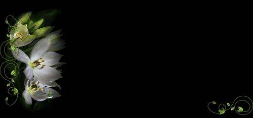 фоны-бордюры