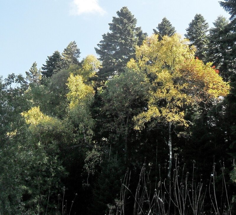 Поход на Тхач, в лесу, Кавказ, Сентябрь 2012