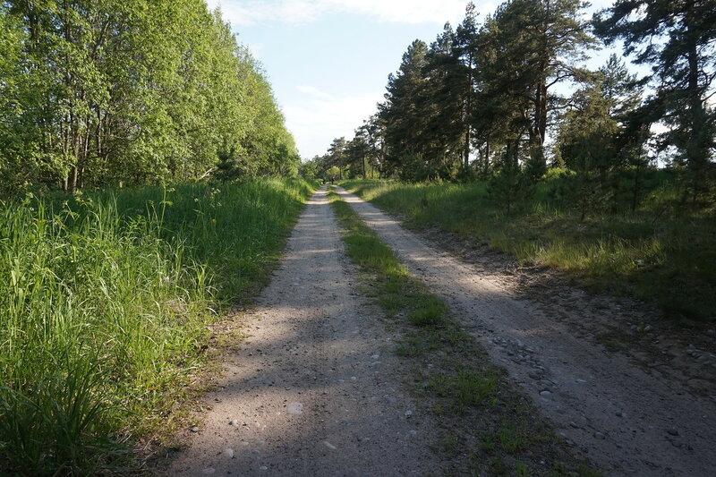 дорога вдоль ладоги между владимировкой и черемухино