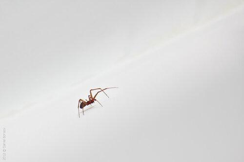 паук, например