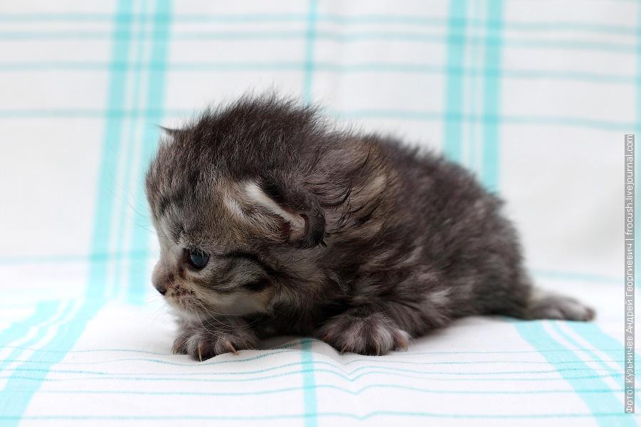 фотографии маленького котенка