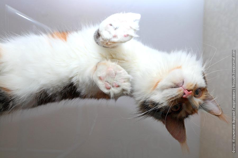 кошка вид снизу