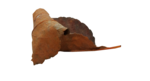 natali_halloween_leaf7.png