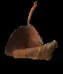 natali_halloween_leaf5-sh2.png