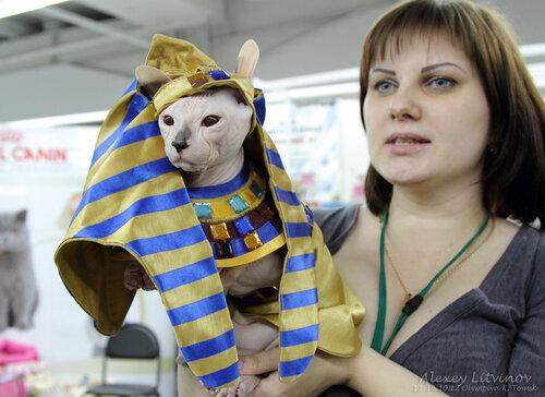 http://img-fotki.yandex.ru/get/6420/135140311.3f/0_944e0_78c9805e_L.jpg