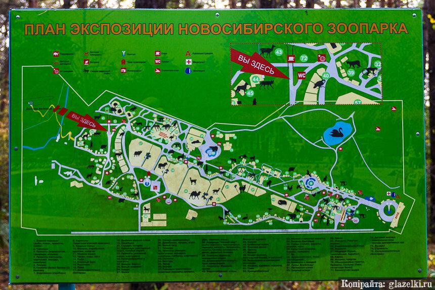 Схема Новосибирского зоопарка.