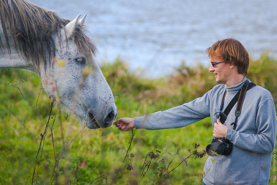 кормление лошади с руки