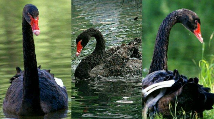 Тройные картинки про природу