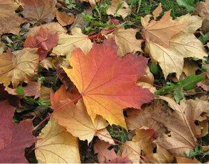 Осенний фотоконкурс 0_811ff_f513f527_M