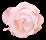 «victorian rose» 0_94a90_b1b19171_S