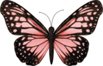 jss_bluejeans_butterfly pink 1.png