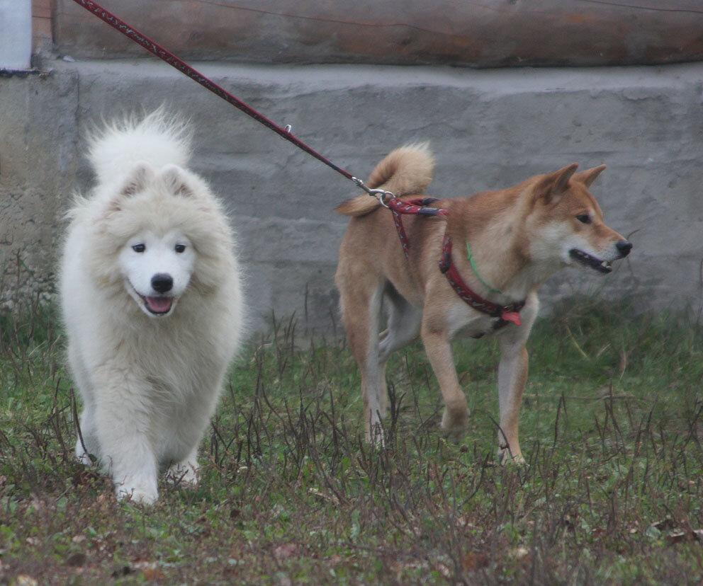 Недельные курсы повышения квалификации для собакообожак :-) Приглашаем всех!!! - Страница 3 0_7d715_49a4398b_XXL