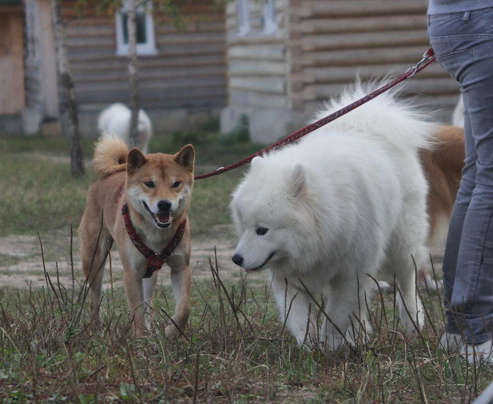 Недельные курсы повышения квалификации для собакообожак :-) Приглашаем всех!!! - Страница 3 0_7d71f_812c8a51_XXL