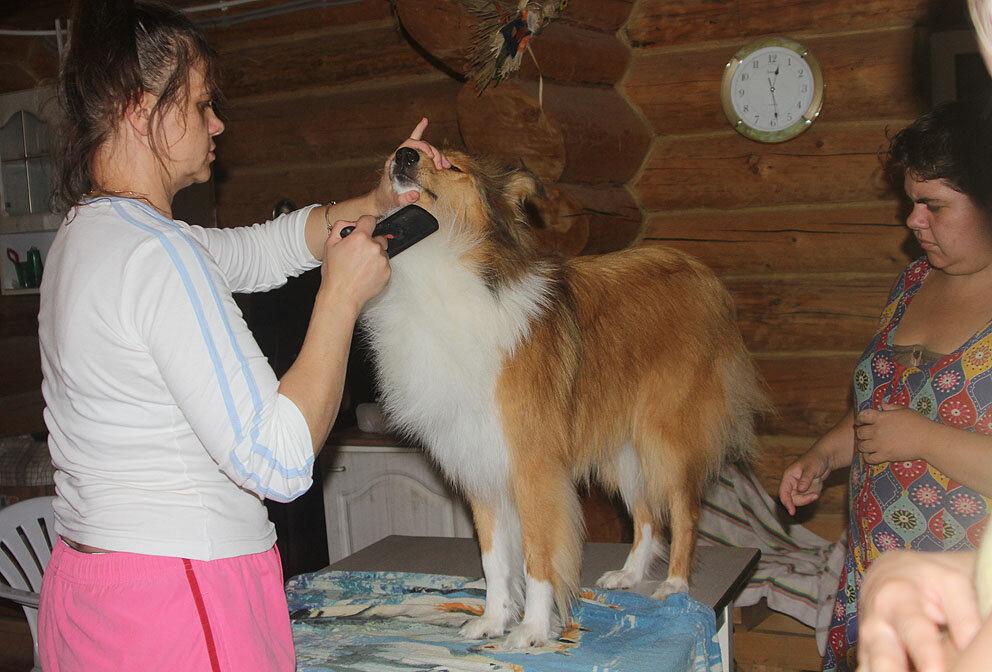 Недельные курсы повышения квалификации для собакообожак :-) Приглашаем всех!!! - Страница 2 0_7d75e_337e16d_XXL