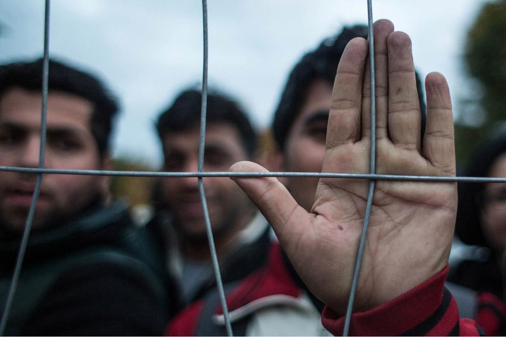 7. Детская фотография на границе Сербии с Хорватией, 25 октября 2015. (Фото Marko Drobnjakovic):