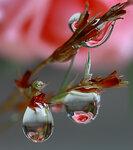 Розовые капли