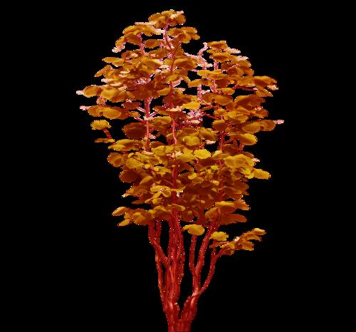 Осенние кусты, трава, деревья, ветки.