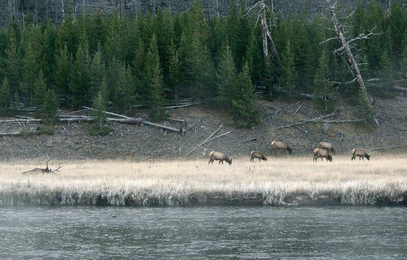 Пейзаж с оленями
