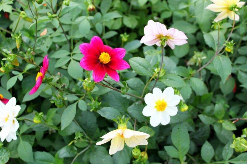 Осенние цветы
