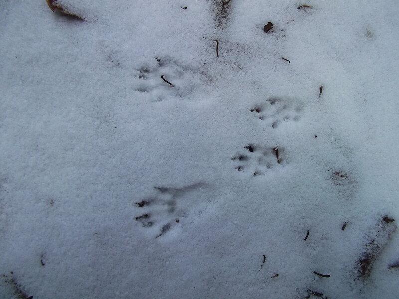карельский перешеек животные: