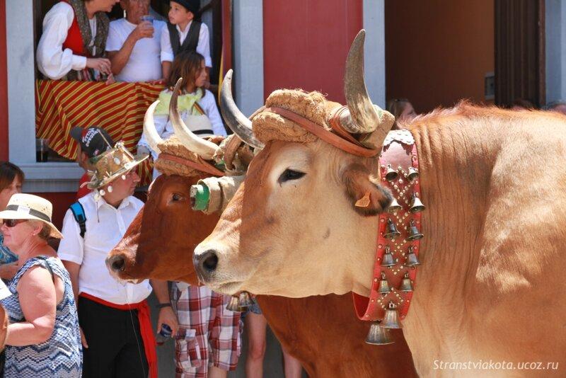 Тенерифе, Гарачико, процессия к Успению Богородицы