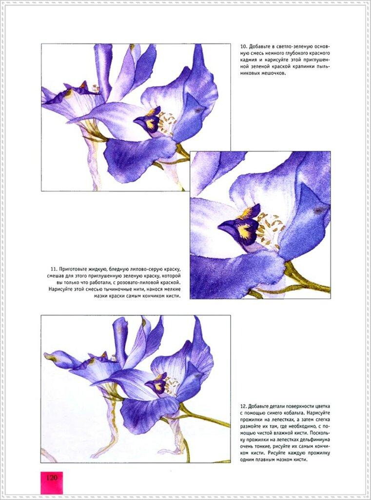 Портреты цветов в акварели книга