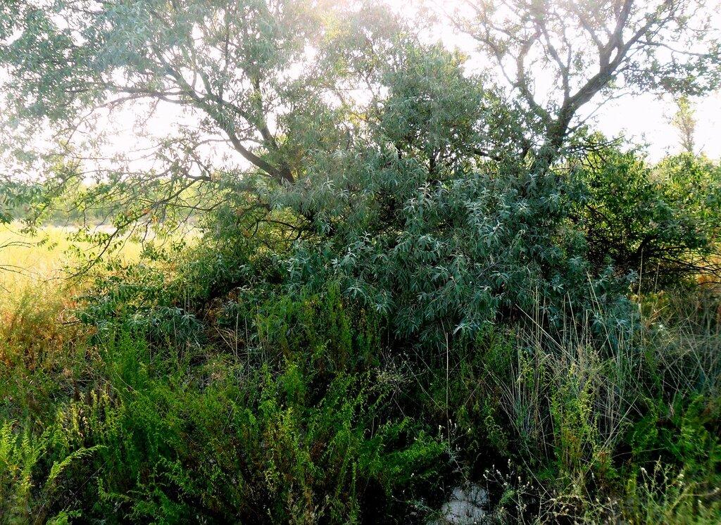 В лесу, летнее утро... SAM_3240.JPG