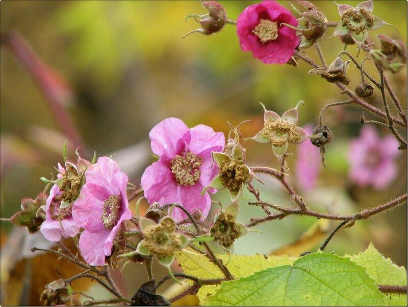 ...Играет красками Весны Златая Осень...