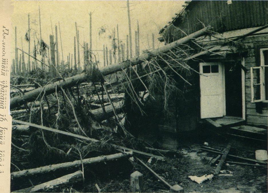13645 Дачи в Люблино после урагана К. Фишер.jpg