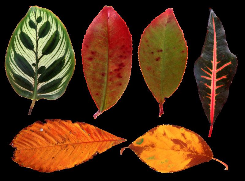 листья деревьев фото