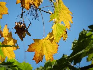 Осенний фотоконкурс 0_a712a_ac7078c8_M
