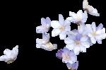priss_spring_el41.png