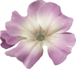 ial_llv_flower1.png