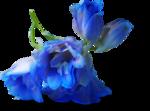 ldavi-shadowedflowers-delphinium24.png