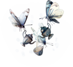 ldavi-shadowedflowers-butterflytea2.png