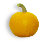 natali_halloween_pumpkin7-sh1.png