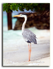 Мальдивы. Ruth Black - shutterstock